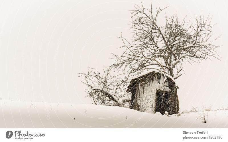 Winterhütte Schnee wandern schlechtes Wetter Schneefall Baum Feld Hügel Menschenleer Hütte alt bedrohlich dunkel gruselig schwarz Traurigkeit Trauer Tod