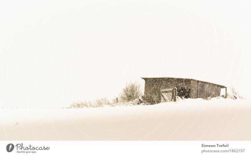 Winterhütte Ausflug Abenteuer Schnee wandern Feld Menschenleer Hütte Tür frieren Häusliches Leben alt bedrohlich einfach gruselig braun weiß Einsamkeit