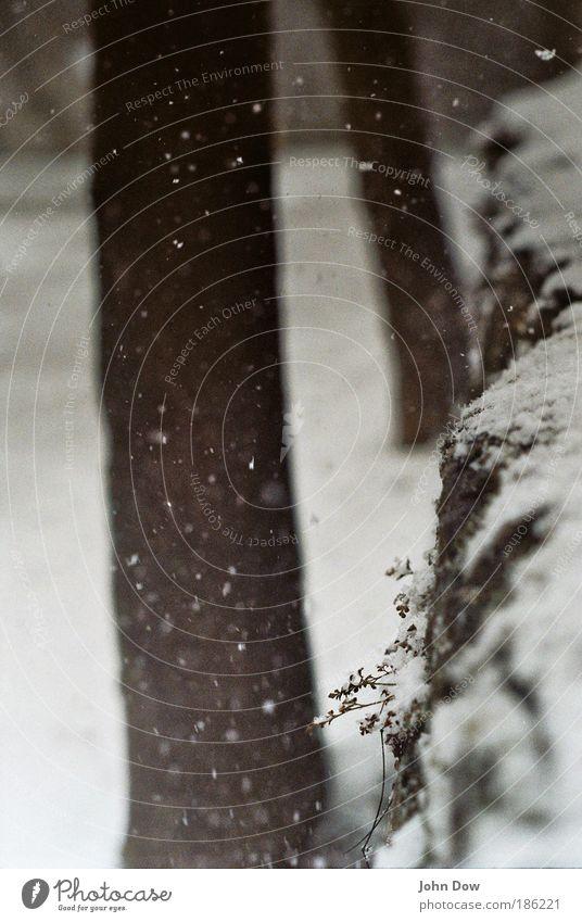 locker flockig Natur Winter Schnee Schneefall Pflanze Baum Sträucher fallen frieren frisch weiß ästhetisch Idylle Flocke Schneeflocke Schneelandschaft bedecken
