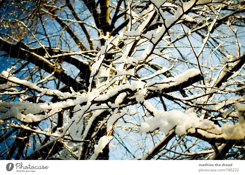 VERZAUBERT Umwelt Natur Landschaft Pflanze Himmel Winter Schönes Wetter Eis Frost Schnee Baum Wald ästhetisch Idylle Pulverschnee Leichtigkeit durcheinander