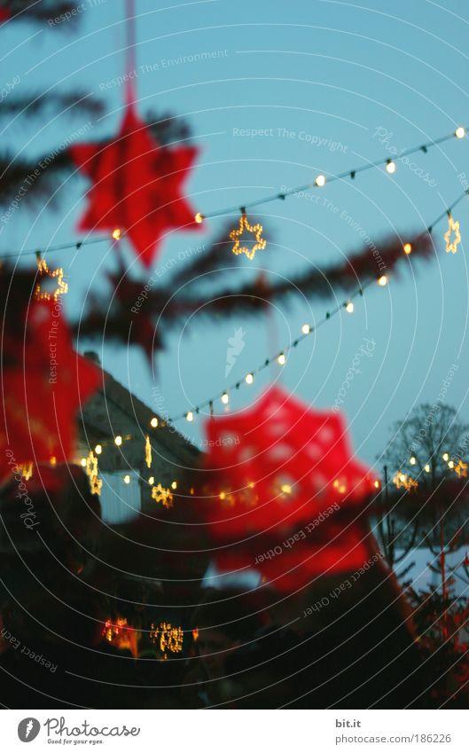 MEHR ROT ALS GOLD Weihnachten & Advent schön rot Winter Feste & Feiern glänzend Stern Stern (Symbol) Weihnachtsbaum Dekoration & Verzierung Ast leuchten Blauer Himmel Weihnachtsdekoration