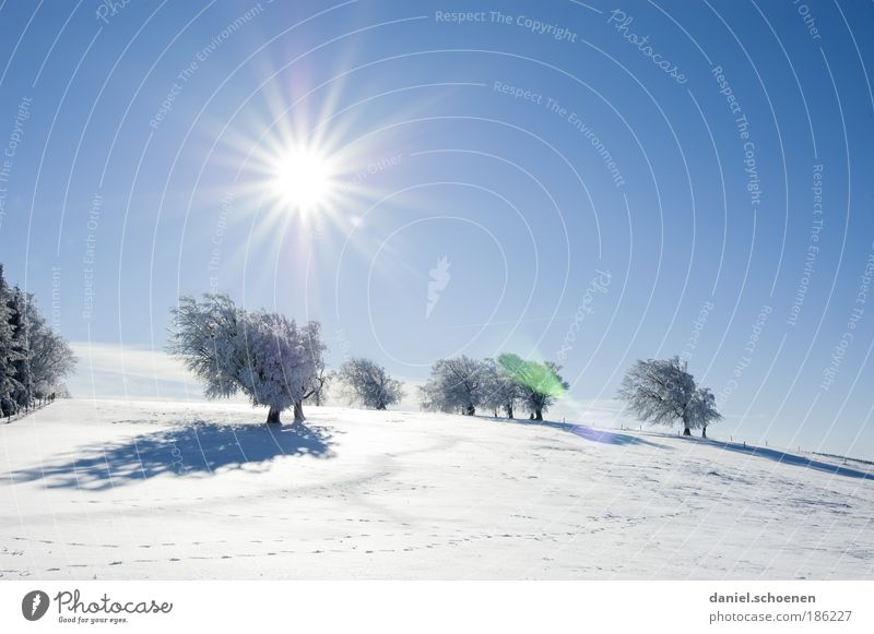 für alle Winterhasser Himmel Natur blau schön weiß Baum Sonne Erholung Landschaft Winter kalt Schnee Glück Horizont Wetter Klima