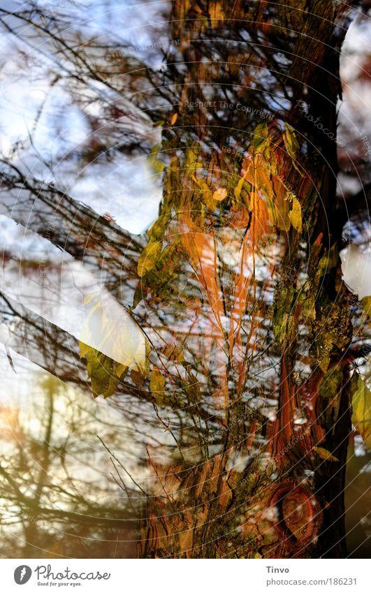 Der Geist der vergangenen Herbstzeit Natur Baum Blatt Wald Leben Park Energie einzigartig außergewöhnlich Unendlichkeit geheimnisvoll Baumstamm chaotisch