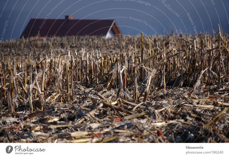 Stoppelfeld Natur Himmel Winter Ferien & Urlaub & Reisen Haus Einsamkeit Herbst Landschaft braun Feld Umwelt Ausflug trist natürlich Ernte