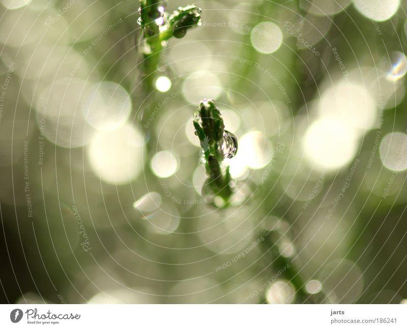 lichtblick Natur Wasser grün ruhig hell glänzend Umwelt Wassertropfen nass frisch Sträucher natürlich Schönes Wetter Sonnenstrahlen