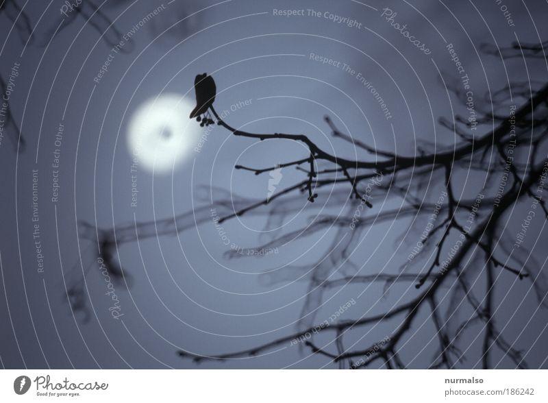 gestern Abend,Grusel garantiert. Natur Winter kalt Kunst verrückt Ast Zeichen Todesangst gruselig Jagd exotisch schreien Mond Aggression Erwartung Nachtleben