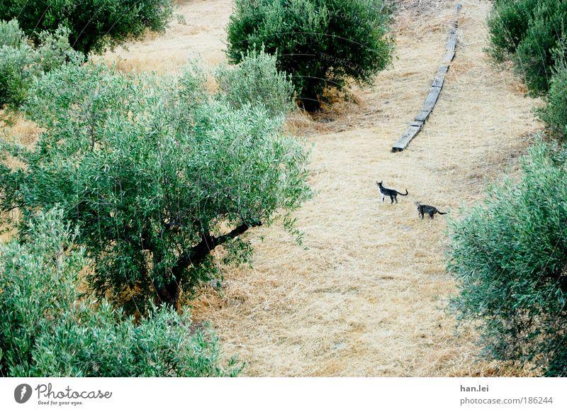 Katzen Natur Tier Erde Sommer Schönes Wetter Baum Sträucher Grünpflanze Nutzpflanze Haustier Wildtier 2 Tierpaar Tierjunges Tierfamilie beobachten entdecken