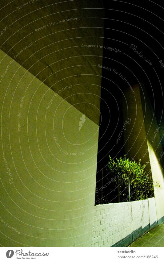 Nachts November Mauer Haus Mieter Vermieter Fenster Fensterkreuz Wand Abend dunkel verdunkeln Baum Sträucher Ast Zweig Hinterhof hinterhaus Lücke baulücke