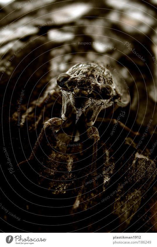 Cicadella Viridis Tier Käfer Zikade Auge Beine Heimchen Nahaufnahme Detailaufnahme Makroaufnahme Starke Tiefenschärfe Tierporträt Tiergesicht unheimlich