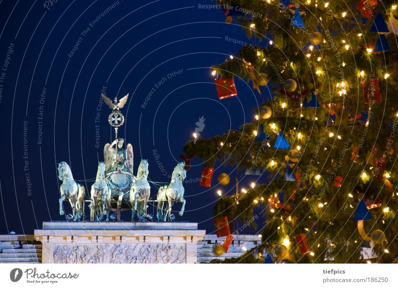 frohe weihnachten. Winter Baum Hauptstadt Sehenswürdigkeit Wahrzeichen Ornament Vorfreude Frieden Brandenburg Gate Berlin Altes Testament night Weihnachtsbaum