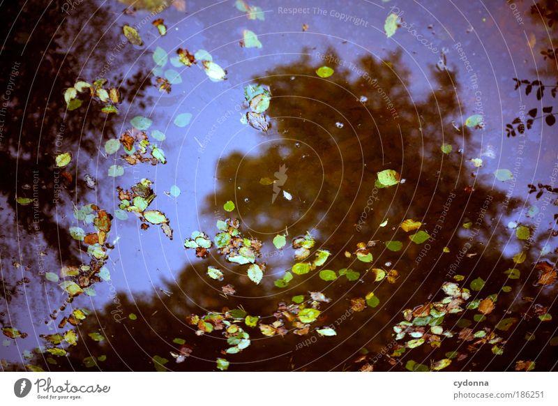 Reinschauen Himmel Natur Wasser schön Pflanze Blatt ruhig Wald Herbst Leben Umwelt träumen Zeit ästhetisch Perspektive einzigartig