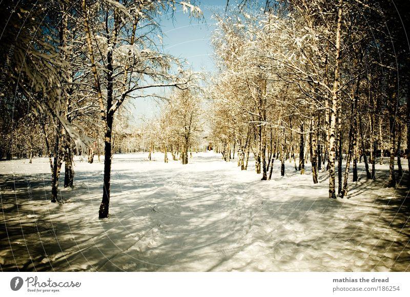 BIRKENWÄLDCHEN Natur Wasser weiß schön Baum Pflanze Winter Wald Schnee Umwelt Landschaft Wege & Pfade Park Zufriedenheit Eis Frost