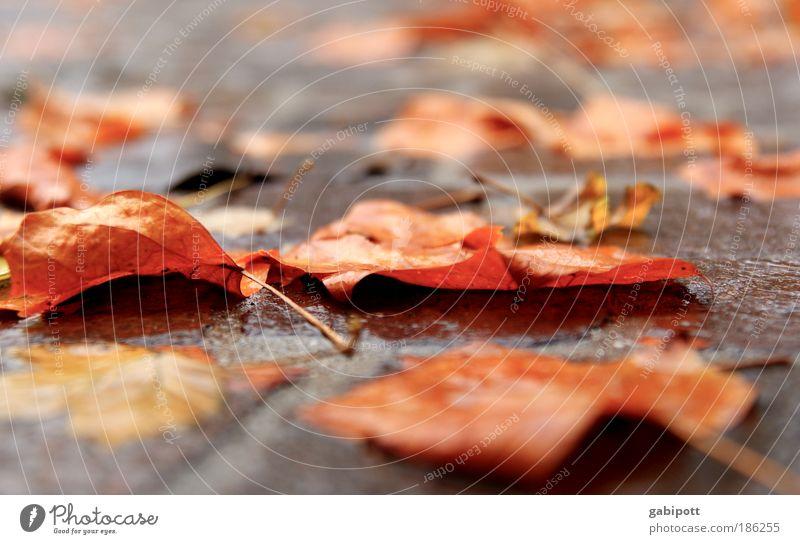 Herbstlaub.nass Umwelt Urelemente Wasser Wetter schlechtes Wetter Regen Pflanze Baum Blatt Straße Kopfsteinpflaster Pflastersteine Asphalt liegen braun Vorsicht