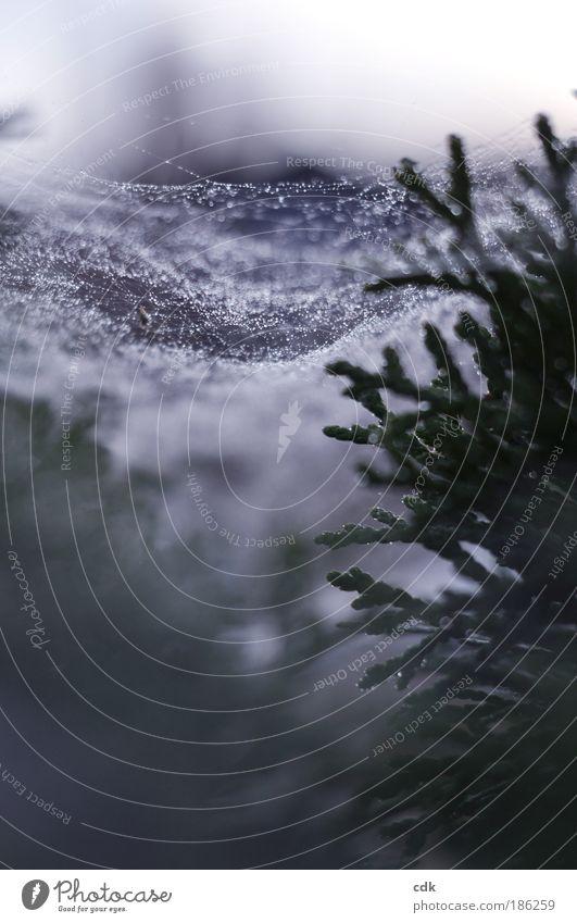 dreaming of a white christmas Umwelt Natur Herbst Winter Klima schlechtes Wetter Pflanze Baum Park Linie Netz Netzwerk Tropfen Bewegung Einsamkeit