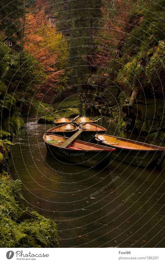Endstation harmonisch Erholung ruhig Ausflug Pflanze Herbst Wald Wege & Pfade Bootsfahrt Fähre Zufriedenheit Kraft Zusammensein Romantik Wachsamkeit authentisch