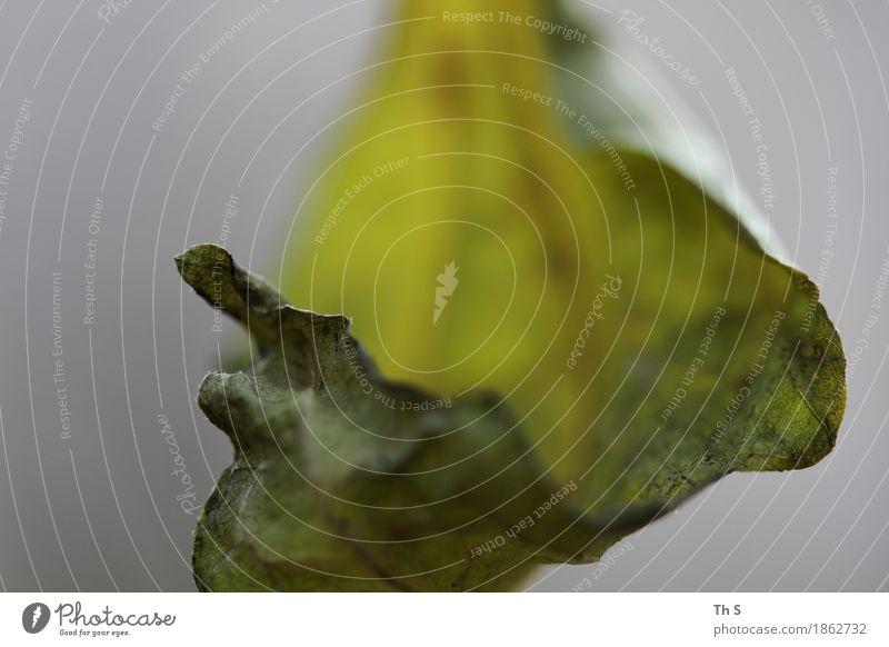 Blatt Natur Pflanze grün ruhig Winter Herbst natürlich Bewegung grau elegant ästhetisch authentisch Blühend einzigartig einfach