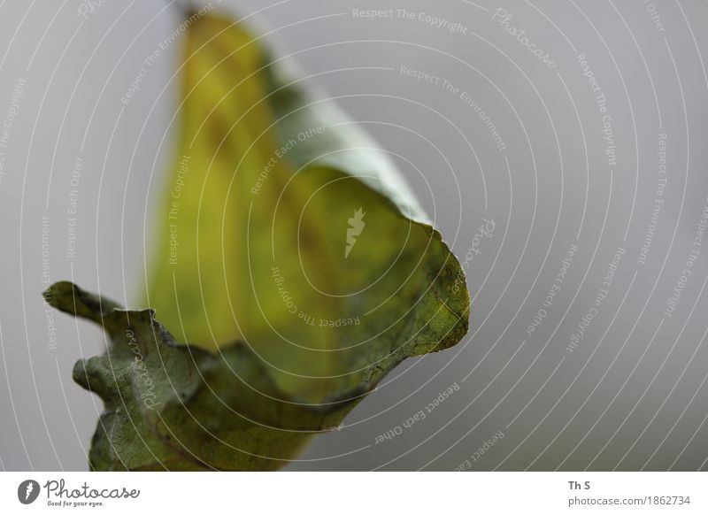 Blatt Natur Pflanze Herbst Winter Bewegung Blühend verblüht ästhetisch authentisch einfach elegant natürlich grau grün Gelassenheit geduldig ruhig einzigartig