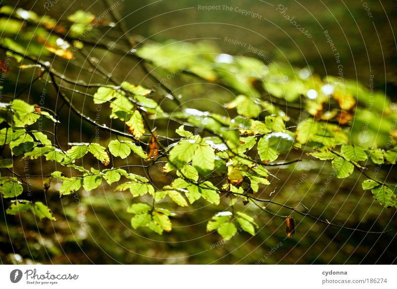 Erste Sonnenstrahlen Natur grün schön Baum Pflanze Blatt ruhig Umwelt Leben Bewegung Luft träumen Zeit Wetter Wind ästhetisch