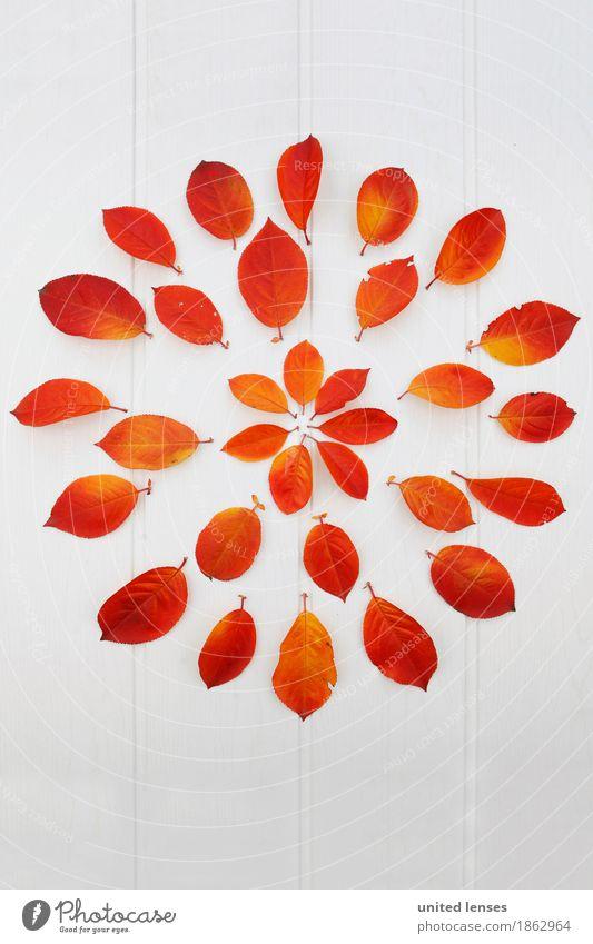 AK# Vielfalt rot Blatt Herbst Kunst Design orange ästhetisch viele Herbstlaub herbstlich Kunstwerk Symmetrie gestalten Herbstfärbung Herbstbeginn Herbstwetter