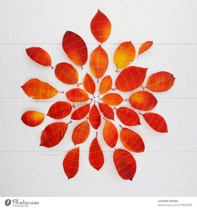 AK# Herbststern Kunst Kunstwerk ästhetisch herbstlich Herbstlaub Herbstfärbung Herbstbeginn Herbstwetter Herbstwald Herbstwind Blatt Blätterdach