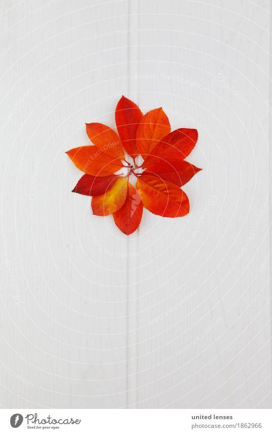 AK# Blattblume Kunst Kunstwerk ästhetisch Herbst herbstlich Herbstlaub Herbstfärbung Herbstbeginn Herbstwetter Herbstwind Muster Symmetrie gebastelt Design