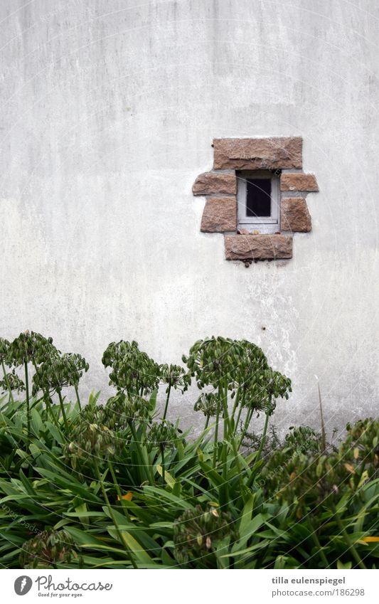 ausguck weiß grün Pflanze Herbst Wand Fenster Garten Stein Mauer Insel Hütte Frankreich Loch Bildausschnitt minimalistisch Gartenbau
