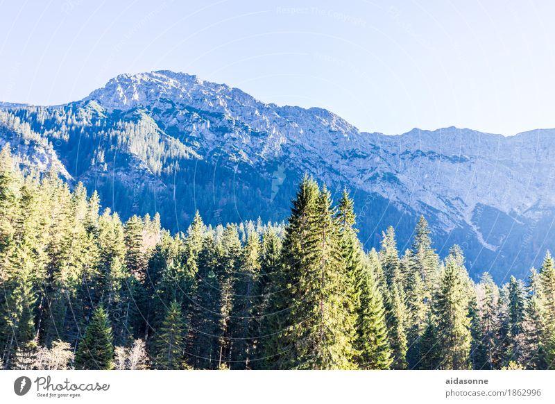 Alpen Natur Pflanze Baum Landschaft Berge u. Gebirge Liebe Herbst Felsen wandern Schönes Wetter Gipfel Schneebedeckte Gipfel atmen