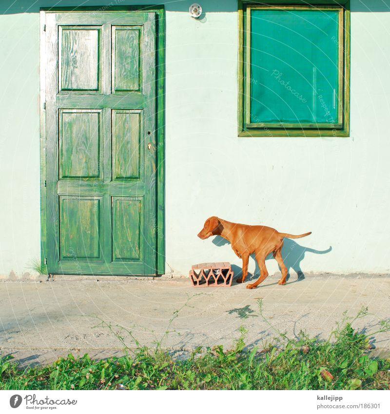 house and hund Schönes Wetter Pflanze Grünpflanze Wildpflanze Garten Wiese Dorf Haus Hütte Mauer Wand Fenster Tür Tier Haustier Hund 1 Tierjunges rebellisch