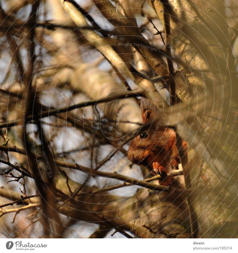 ..kriegst mich nicht! Herbst Winter Pflanze Baum Tier Wildtier Tiergesicht Fell Krallen Pfote 1 hocken kuschlig niedlich Sicherheit Schutz Geborgenheit
