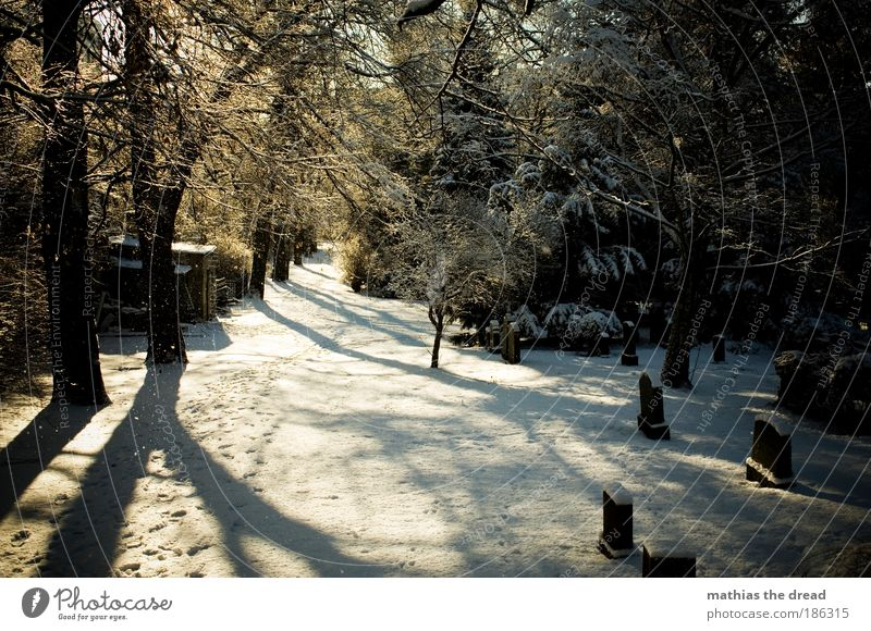 DER LETZTE WEG Natur schön Pflanze Baum ruhig Landschaft Winter Wald kalt Umwelt Schnee Traurigkeit Tod Wege & Pfade Eis Park