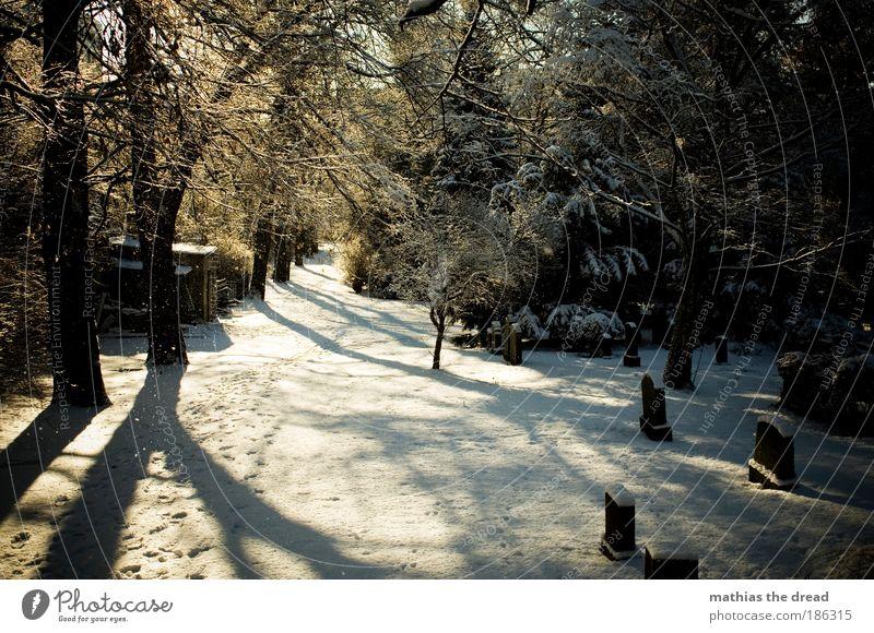 DER LETZTE WEG Umwelt Natur Landschaft Pflanze Winter Schönes Wetter Eis Frost Schnee Baum Park Wald schön Hoffnung Glaube Traurigkeit Idylle ruhig Tod
