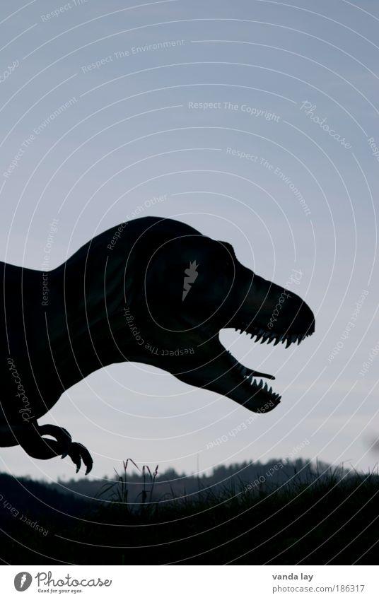 Der will nur spielen! Natur Tier Spielen Landschaft Angst Umwelt gefährlich Gebiss bedrohlich wild Gewalt Wildtier Jagd Fressen Todesangst Aggression
