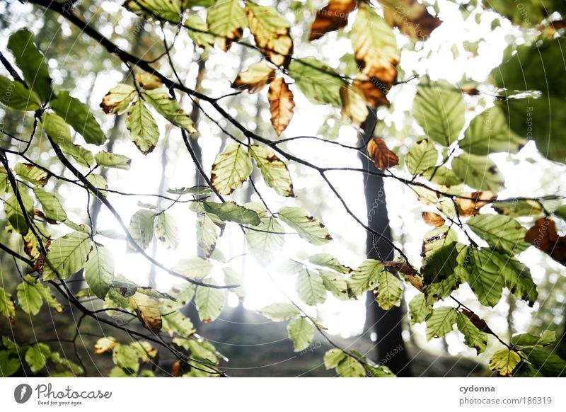 Guten Morgen! Natur grün schön Baum Blatt ruhig Wald Erholung Leben Umwelt Freiheit Bewegung träumen Zeit ästhetisch Wandel & Veränderung