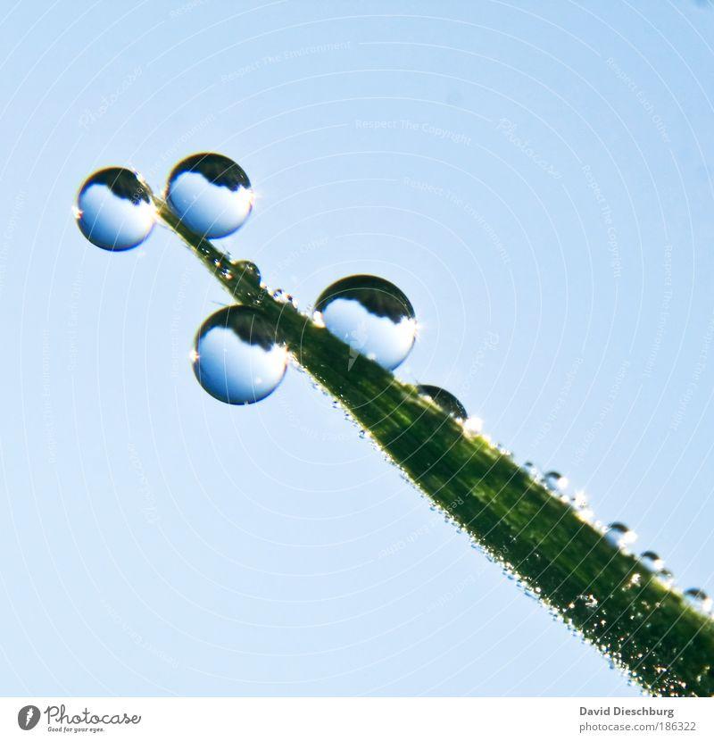 Murmeltau Natur Pflanze blau grün Sommer Frühling Gras Regen Textfreiraum mehrere Wassertropfen nass rund Tropfen Wolkenloser Himmel Kugel