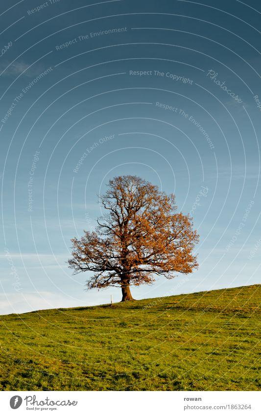 Baum Umwelt Natur Landschaft Pflanze Garten Park Feld Hügel alt Herbst Sonnenstrahlen Jahreszeiten orange Blatt Berghang Gras Farbfoto Außenaufnahme