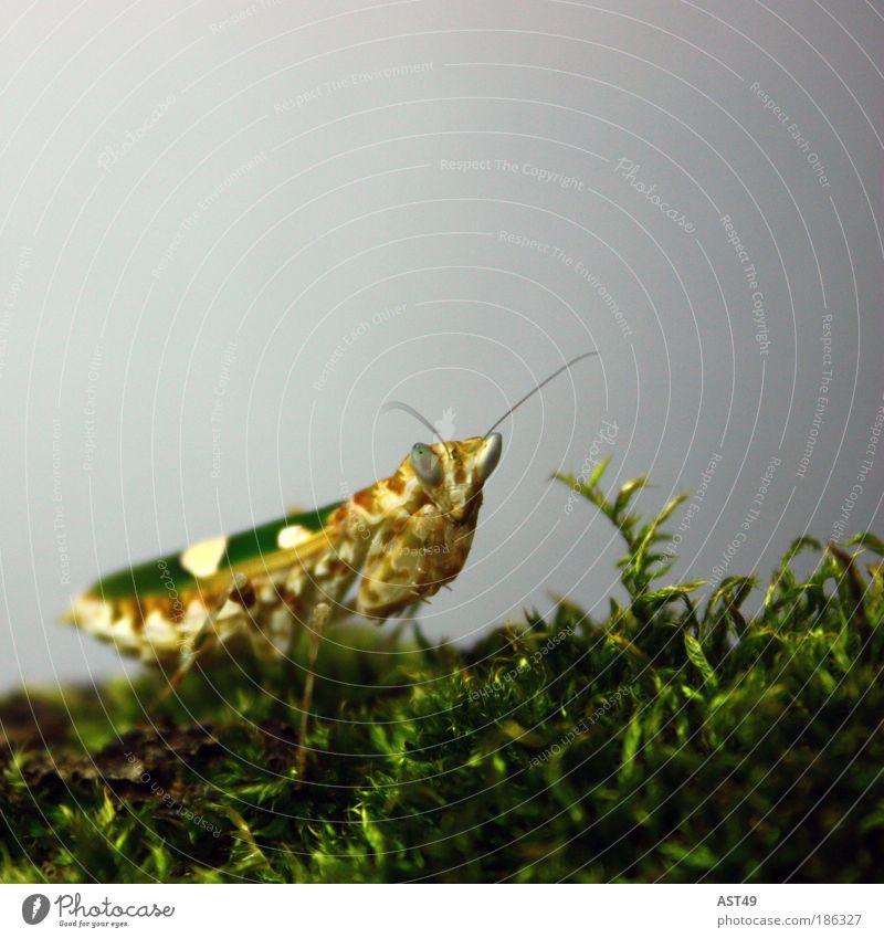 Gottesanbeterin grün Tier Farbe Umwelt Gefühle braun Wildtier Freizeit & Hobby natürlich Flügel bedrohlich Idylle Neugier Insekt gruselig Jagd