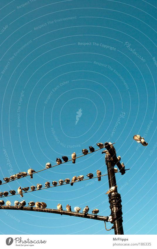 Polonaise Tier Erholung Vogel sitzen USA beobachten Tiergruppe Blick Farbfoto Außenaufnahme Amerika Schwarm