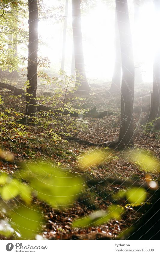 Lichtdurchflutet Natur schön Baum ruhig Blatt Wald Leben Erholung träumen Wege & Pfade Landschaft hell Kraft Wetter Umwelt Energie