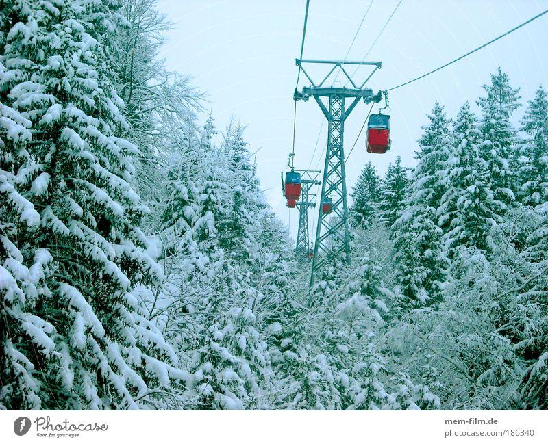 rauf... und dann wieder runter rot Winter kalt Berge u. Gebirge Tanne Wintersport Verkehrsmittel Winterurlaub Skigebiet Gondellift Nadelwald Seilbahn Neuschnee