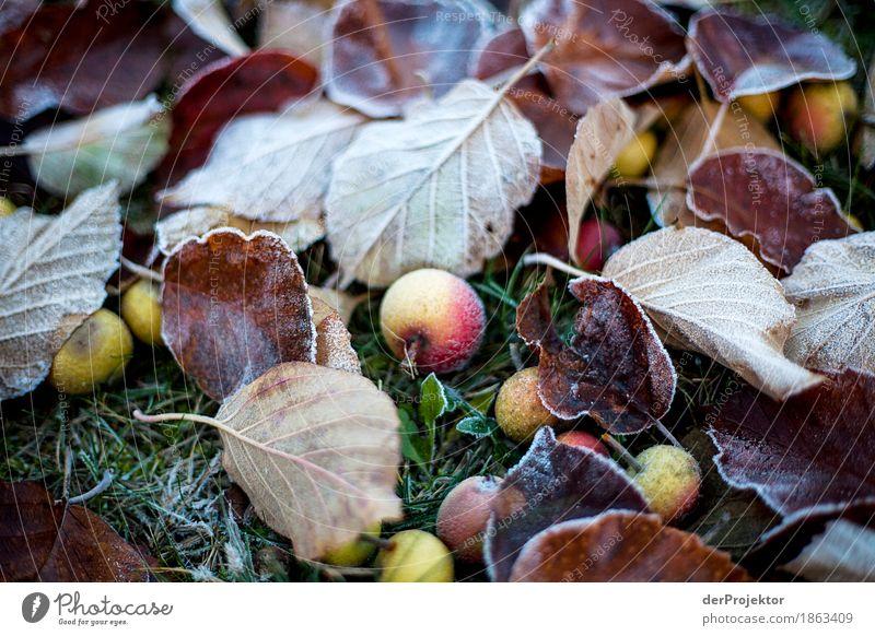 Frostiges Fallobst Natur Ferien & Urlaub & Reisen Pflanze Landschaft Blatt Freude Wald Umwelt kalt Gefühle Herbst Wiese Tourismus Frucht Eis Ausflug