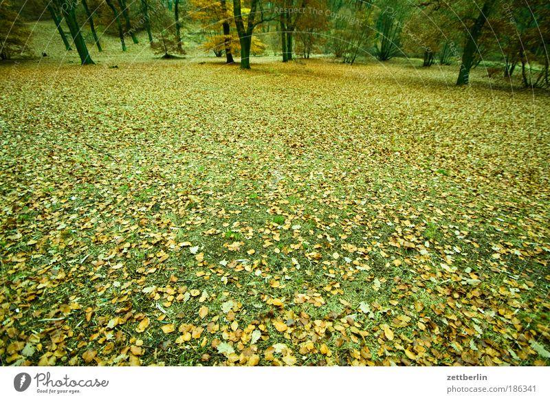 Herbst Wald Wiese Ast Baumstamm Zweig November Herbstlaub Oktober Waldlichtung Textfreiraum Unterholz Märchenwald