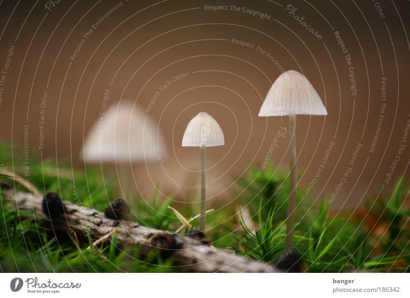 Gelandet Natur ruhig Umwelt Landschaft Herbst Erde Ostsee Wildpflanze