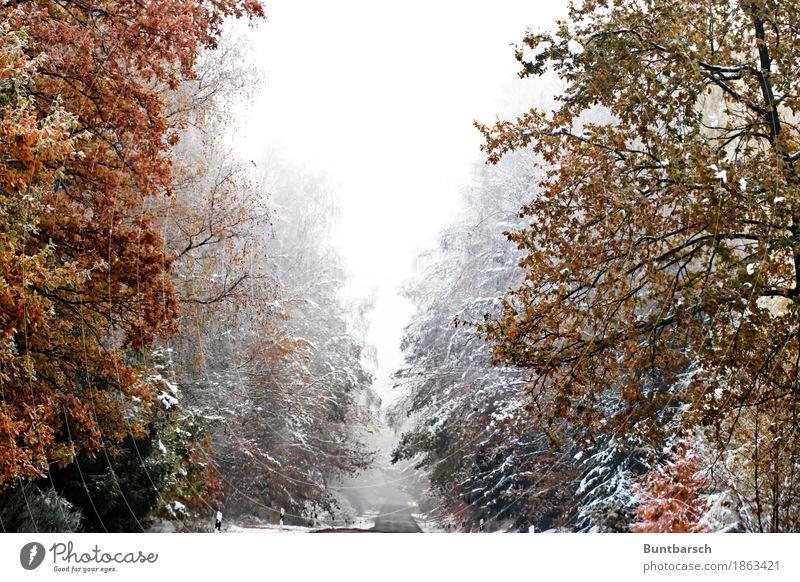 Weg in den Winter Ferien & Urlaub & Reisen Tourismus Schnee Winterurlaub wandern Natur Landschaft Pflanze Wetter Eis Frost Baum Wald Straße Glätte kalt Idylle