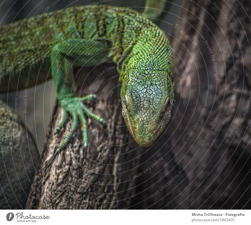 Echse am Baumstamm Natur Pflanze grün Baum Tier gelb natürlich Holz orange Zufriedenheit Wildtier Perspektive Klima beobachten Neugier nah