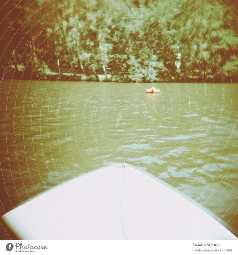 ich bin der König der Welt! Wasser alt Baum grün Pflanze Wald springen träumen Lomografie Wärme See Wellen Schwimmen & Baden Sträucher Sachsen Idylle