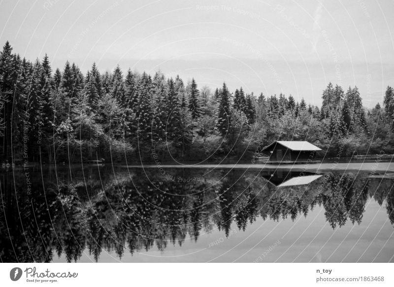 Haus im See Umwelt Natur Landschaft Wasser Winter Eis Frost Schnee Wald Seeufer frieren frei Glück schwarz weiß Gefühle Stimmung Einsamkeit seehütte