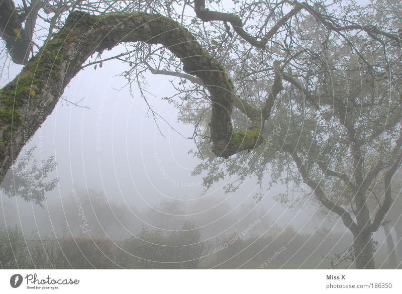 Nebel Natur alt Winter Einsamkeit Wald dunkel kalt Herbst Garten Baum Stimmung Nebel Ende Ast Vergänglichkeit