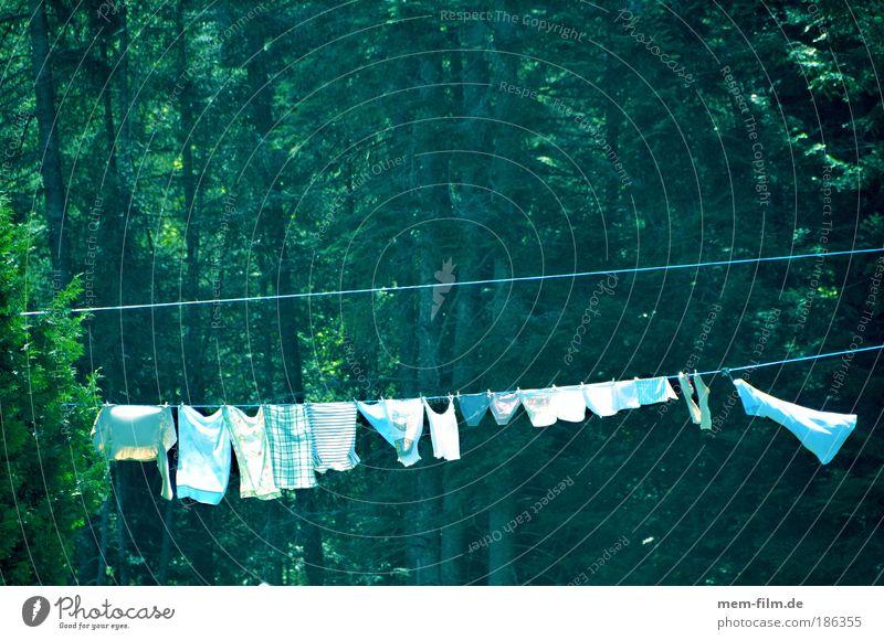 90 grad Natur weiß Baum grün Wald Seil Bekleidung Sauberkeit rein Reinigen trocken Schönes Wetter Wäsche waschen Haushalt trocknen