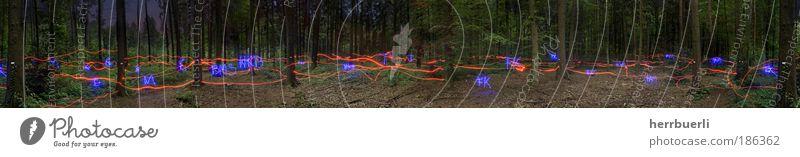 Waldlichtspiel Stil Design Spielen Joggen Kunst Ausstellung Kunstwerk Tanzen Kultur Neue Medien Natur Herbst Baum Moos Wildpflanze Feld fangen Jagd springen