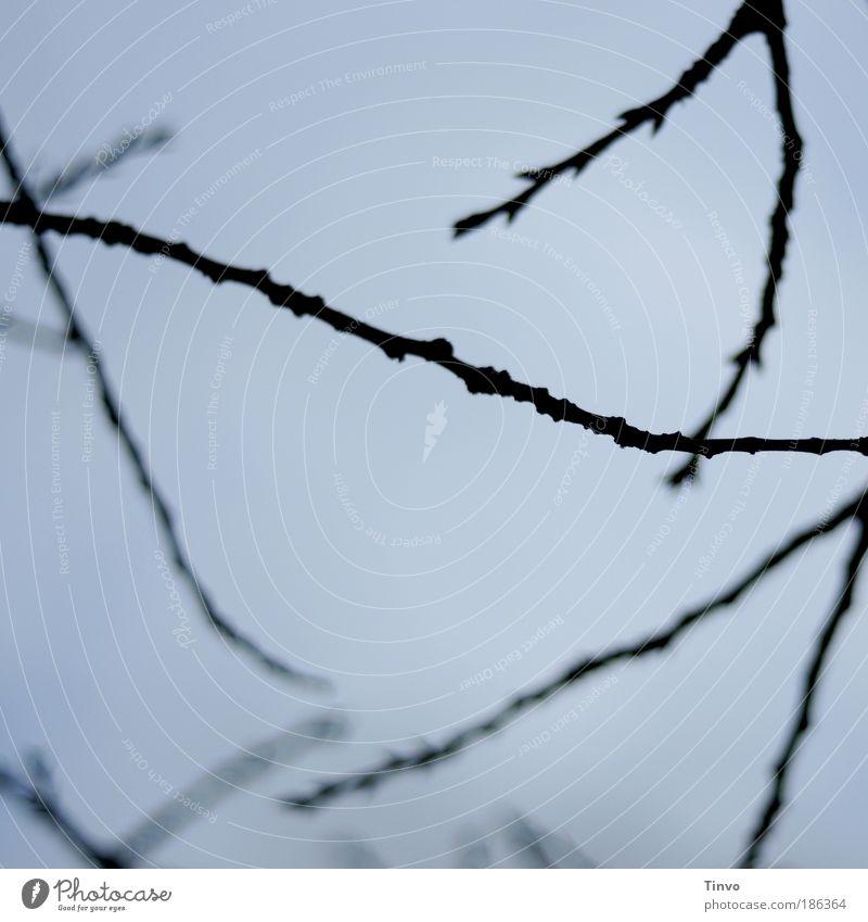 Lebenslinien - der Himmel ist blau... Natur Baum schwarz Park Quadrat Zweige u. Äste